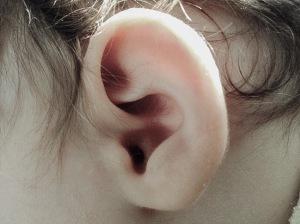 orecchia_piccola